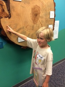 tree rings with Noah
